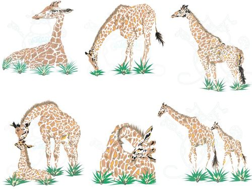 Giraffes in grass Display JPEG