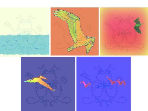 Birds Digital Paper JPEG Display